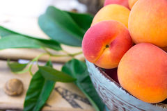 Fresh ripe organic whole apricots in ceramic bowl on wood garden fruit box, kernel, green leaves Stock Photography