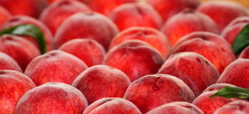Fresh ripe peaches. Royalty Free Stock Photography