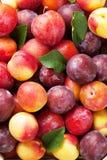 Fresh ripe peaches Stock Photo