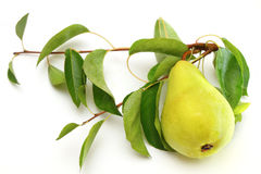 Fresh ripe pear with the branch. Isolated on white Royalty Free Stock Image