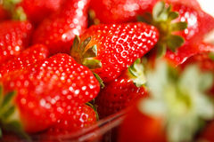 Fresh Ripe Perfect Strawberries.Selective focus Stock Photos