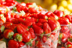 Fresh Ripe Perfect Strawberries.Selective focus Royalty Free Stock Image