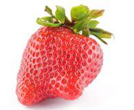 Fresh Ripe Perfect Strawberry Stock Photography