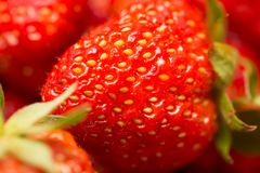 Fresh ripe perfect strawberry - Food Frame Background . Royalty Free Stock Image