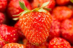 Fresh ripe perfect strawberry - Food Frame Background Royalty Free Stock Images
