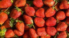 Fresh ripe perfect strawberry Royalty Free Stock Photo