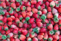 Fresh ripe perfect strawberry Stock Image