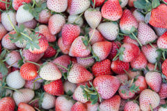 Fresh ripe perfect strawberry - Food Frame Background Royalty Free Stock Photography