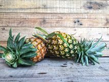 Fresh ripe pineapple just picked up from the garden. royalty free stock photo