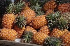 Fresh Ripe Pineapples for Sale Stock Image