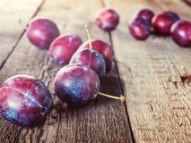 Fresh ripe plum prunes crop harvest Stock Images