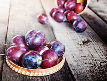 Fresh ripe plum prunes crop harvest Stock Photography