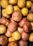 Fresh ripe potatoes stock image