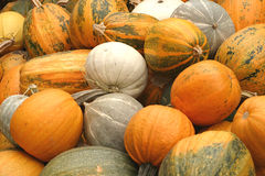 Fresh ripe pumpkins Stock Photography