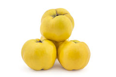 Fresh ripe quinces. Pile of fresh ripe yellow quinces isolated on white background Stock Image