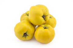Fresh ripe quinces. Pile of fresh ripe yellow quinces  on white background Stock Photos