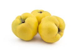 Fresh ripe quinces. Three fresh ripe yellow quinces isolated on white background Stock Photo