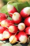 Fresh ripe radish closeup Royalty Free Stock Images