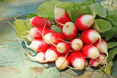 Fresh ripe radish closeup Stock Photo
