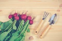 Fresh ripe radish and gardening tools. On wooden background Royalty Free Stock Photography
