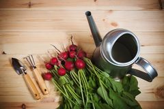 Fresh ripe radish, watering can and gardening tools. On wooden background. Top view Royalty Free Stock Photography