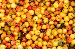 Fresh ripe Rainier cherries. On display at the farmers market Stock Photography