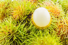Fresh and ripe rambutans Royalty Free Stock Image