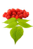 Fresh ripe raspberries Stock Photos