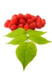 Fresh ripe raspberries. Isolated on white Stock Photos