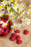 Fresh ripe raspberries and camomile flowers Stock Images