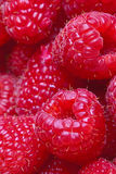 Fresh ripe raspberries Royalty Free Stock Photos