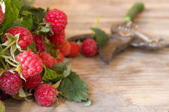 Fresh ripe raspberries. With large leaves on the old wooden table Stock Image