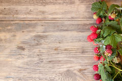 Fresh ripe. Raspberries with large leaves on the old wooden table with copy space Royalty Free Stock Image