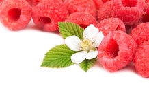 Fresh, ripe raspberries with leaves and flower. On white, with copy space royalty free stock photography