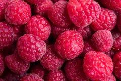 Fresh ripe raspberries macro shot, summer fruit background Stock Photos