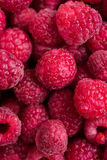 Fresh ripe raspberries macro shot, summer fruit background Stock Images