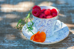 Fresh ripe raspberries and an old porcelain cup with a saucer on a wooden table in the garden. Royalty Free Stock Photo
