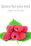 Fresh, ripe raspberries over green leaves, isolated on white background. Fresh, ripe raspberries over green leaves, isolated on white background, with space for Royalty Free Stock Images