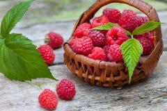 Fresh ripe raspberries. In small wicker basket Royalty Free Stock Photography