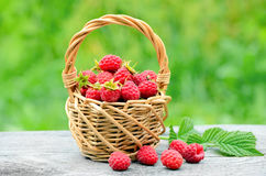 Fresh ripe raspberries in the wicker basket Royalty Free Stock Photos