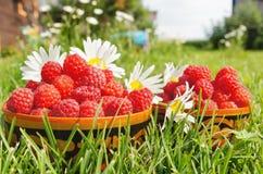 Fresh ripe raspberry Royalty Free Stock Photography