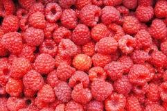 Fresh ripe raspberry Stock Photos
