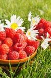 Fresh ripe raspberry Royalty Free Stock Images