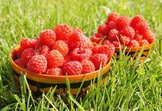 Fresh ripe raspberry Royalty Free Stock Photo