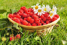 Fresh ripe raspberry Stock Photo