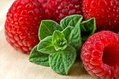 Fresh ripe raspberry. And mint leaves Royalty Free Stock Photos