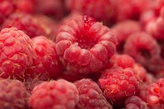 Fresh ripe raspberry as a background. Photo of an abstract texture Stock Photos