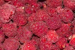 Fresh ripe raspberry as a background. Photo of an abstract texture Stock Photography