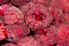 Fresh ripe raspberry as a background. Photo of an abstract texture Royalty Free Stock Photography