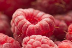 Fresh ripe raspberry as a background. Photo of an abstract texture Stock Images